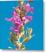 Honey Bees On Sage 1 Metal Print