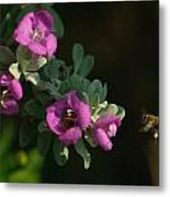 Honey Bees On Sage 2 Metal Print