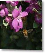 Honey Bees On Sage 3 Metal Print