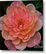 Honey Bunch Metal Print