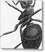 Hooke: Ant, 1665 Metal Print