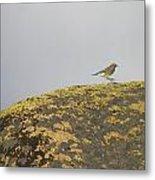 Hopping Blue Bird Metal Print