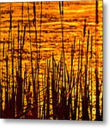 Horicon Cattail Marsh Wisconsin Metal Print