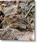 Horned Toad Metal Print