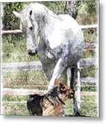 Horse And Dog Play Metal Print