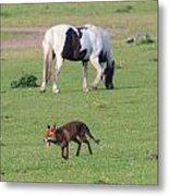 Horse And Fox Metal Print