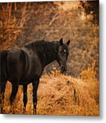 Horse And The Haystack Metal Print