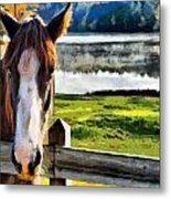 Horse At Lake Leroy Metal Print