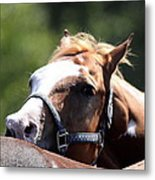 Horse At Mule Days 2012 - Benson Metal Print