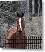 Horse Behind The Fence Metal Print