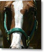 Horse Face Metal Print