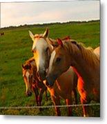 Horse Family Soft N Sweet Metal Print
