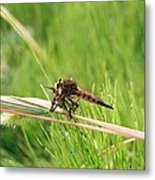 Horse Fly Close-up Metal Print