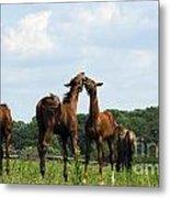 Horse Foul Play II Metal Print