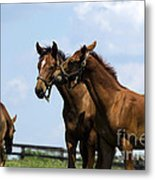 Horse Foul Play Vi Metal Print