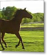 Horse Galloping Metal Print