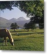 Horse Grazing On A Landscape Metal Print
