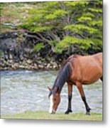 Horse Grazing Metal Print by Thanks for choosing my photos.