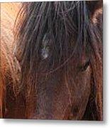 Horse Hair 2 Metal Print