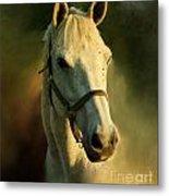Horse Head Portriat Metal Print