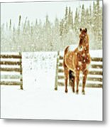 Horse In A Snowstorm Metal Print by Roberta Murray - Uncommon Depth