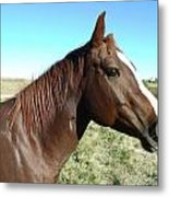 Horse In Chocolate Metal Print by Brian  Maloney