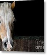 Horse In The Stable Metal Print