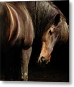 Horse Looking Over Shoulder Metal Print
