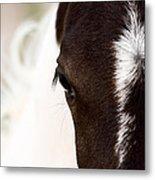 Horse Mare Saskatchewan Field Metal Print