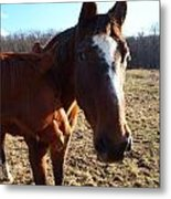 Horse Neck Metal Print by Robert Margetts
