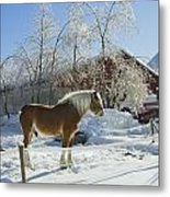 Horse On Maine Farm After Snow And Ice Storm Metal Print