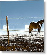 Horse Pasture Revdkblue Metal Print