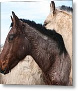 Horse Pileup Metal Print