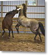 Horse Play Metal Print by Dean Bennett