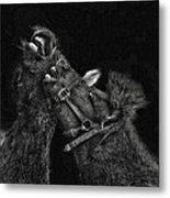 Horse Play Metal Print by Pat Abbott