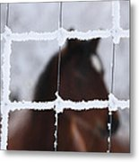 Horse Viewed Through Frost Covered Wire Fence Metal Print