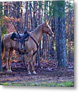 Horse Waiting For Rider Metal Print