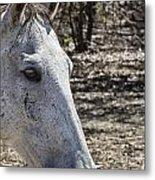 Horse With No Name V3 Metal Print