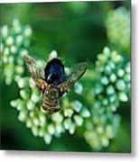 Horsefly No Bother Me Metal Print