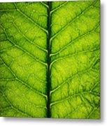 Horseradish Leaf Metal Print
