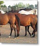 Horses-31 Metal Print