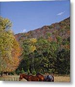 Horses And Autumn Landscape Metal Print