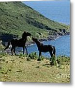 Horses By The Sea Metal Print