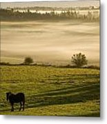 Horses In The Morning Mist, North Metal Print