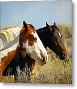 Horses In The Wild Metal Print