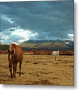 Horses In Winter Landscape  Truchas, New Mexico Metal Print by Mary Hockenbery