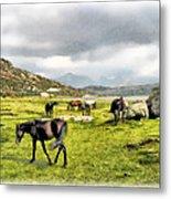 Horses Of Wyoming Metal Print