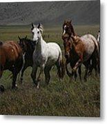 Horses Run Free Metal Print