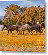 Horses Running Free Metal Print
