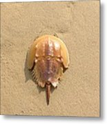 Horseshoe Crab In The Sand Campground Beach Cape Cod Eastham Ma Metal Print